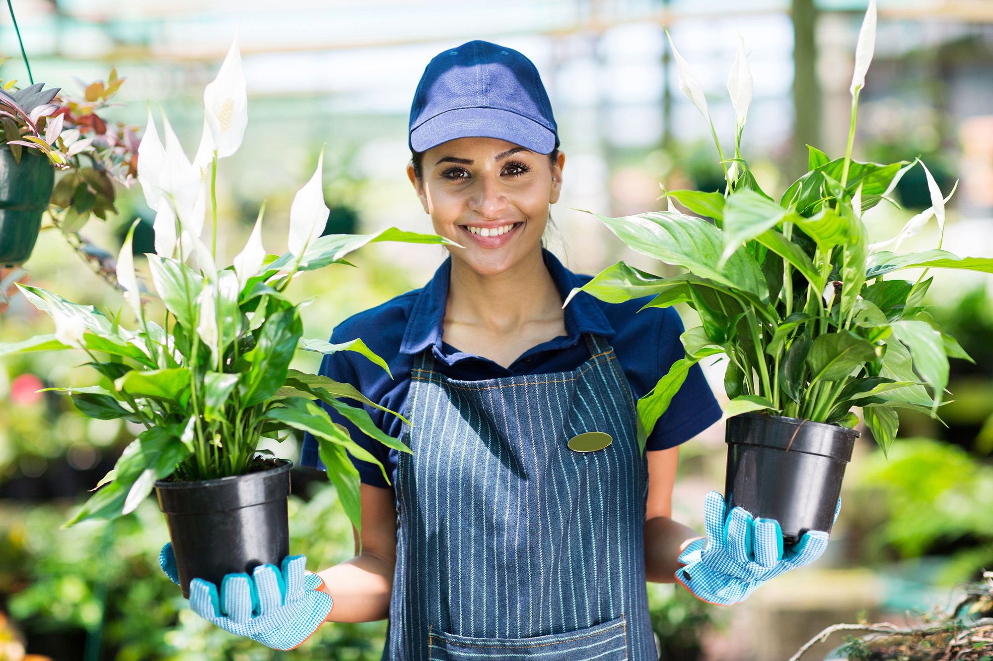 pretty female gardener holding two potted flowers in a garden center