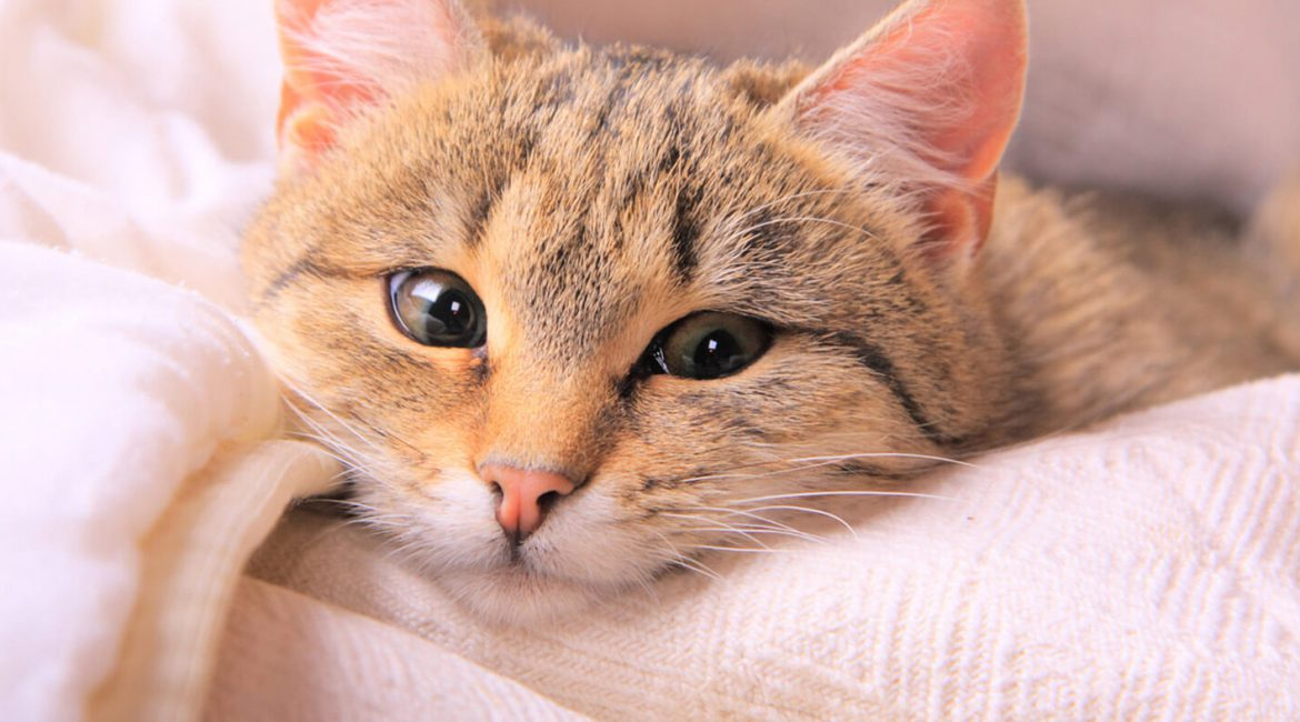 Be Aware: There's a Deadly Virus on the Loose Striking These Pets